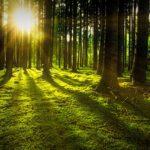Solos (o no) en el bosque